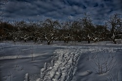 Winter apple orchard on a sunny day. Snow trail, toning photo.