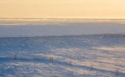 Winter arctic landscape. The car drives on the road in the tundra. A frozen sea in the distance. Cold windy and frosty weather. Blowing snow. Chukotka, Polar Siberia, Far North Russia. Northern nature