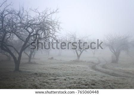 winter / autumn background /  foggy frozen garden