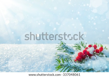 Winter background with branches of spruce and bunch of rowan #337048061