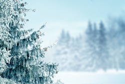 Winter  background with fir tree branch .Merry Christmas and happy New Year greeting card with copy-space. Christmas landscape with snow and fir trees