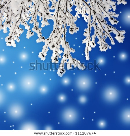 winter background with snow covered branch