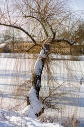Winter barren branches of tree with bask covered in snow leaning over the frozen over canal lit up by sunlight