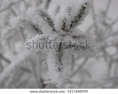 Winter beauty with frozen ice crystals #1417688909