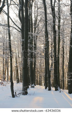 Winter birch forest detail - stock photo