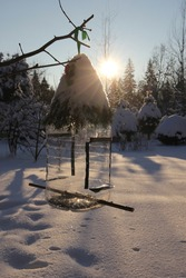 Winter bird feeder made of plastic canister, decorated with fir tree branches against sunny snowy winter landscape