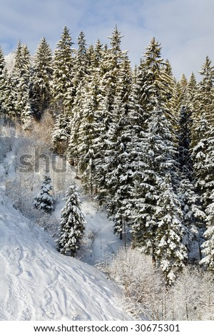 winter calm mountain landscape with rime and snow covered spruce trees