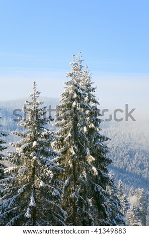 winter calm mountain landscape with rime and snow covered spruce trees and some snowfall