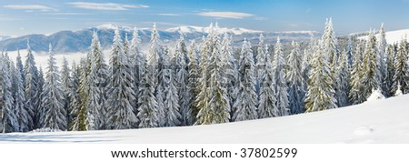 Winter calm mountain landscape with rime and snow covered spruce trees. Three shots stitch image.