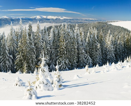 Winter calm mountain landscape with rime and snow covered spruce trees (view from Bukovel ski resort, Ukraine). Three shots stitch image.