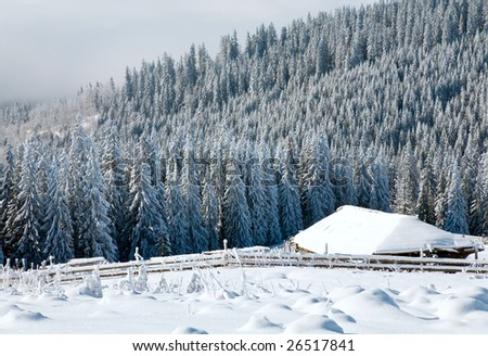 winter calm mountain landscape with rime and snow covered spruce trees with sheds group near forest
