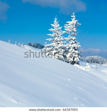 Winter calm mountain  landscape with snow covered firs and on ridge (Kukol Mount, Carpathian Mountains, Ukraine).