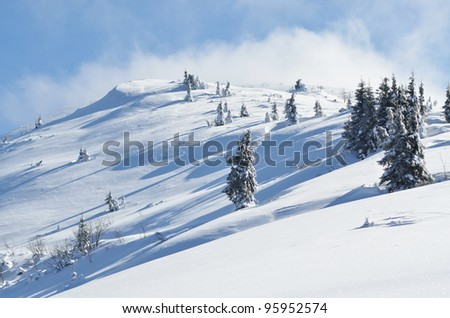 Winter calm mountain landscape with snow covered firs on ridge