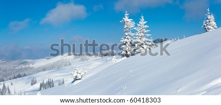 Winter calm mountain panorama landscape with snow covered firs and on ridge (Kukol Mount, Carpathian Mountains, Ukraine). Two shots stitch image.