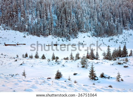 winter calm mountain view with rime and snow covered spruce trees and sheds group near forest