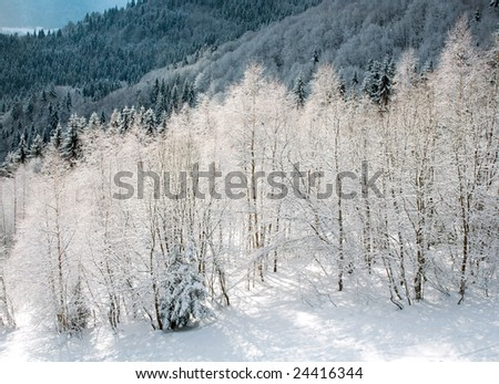 winter calm mountainside with snow-covered trees