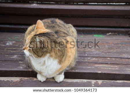 Winter cats on the sun #1049364173