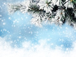 winter christmas background with fir branches cones and snow on blue wooden texture