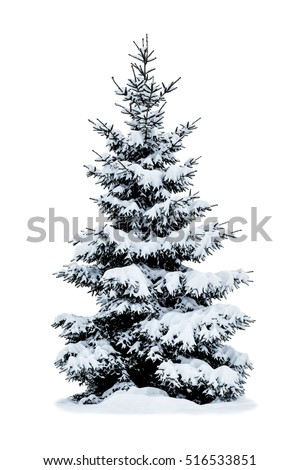Stock Photo Winter Christmas tree covered with snow isolated on white background.
