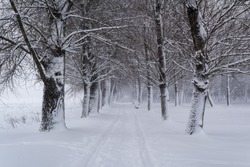 Winter city landscape. Winter alley in the park in a blizzard. A narrow line of paths between trees.