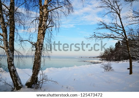Winter coast view at a calm bay with birches and snow