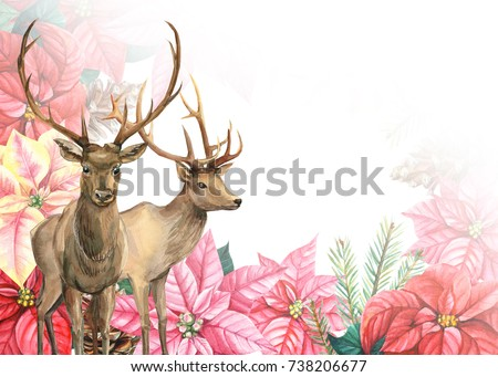 winter composition deer with the flowers of poinsetia, spruce branches, leaves, christmas card, watercolor illustration, hand drawing