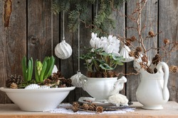 Winter composition with fresh white cyclamen in faience pot, hyacinth, moss, glass Christmas decoration,      cones, hand made knitted napkin on branch pine background, Vintage style, holiday symbol