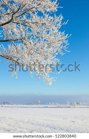 Winter countryside landscape and tree with hoarfrost