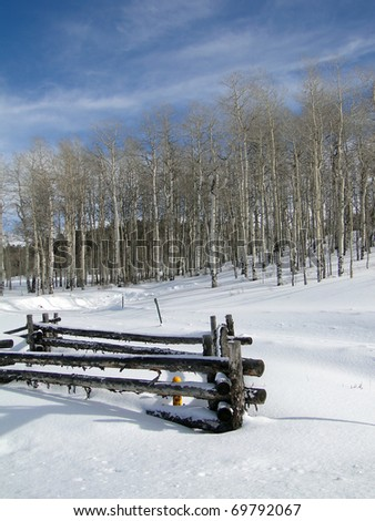 Winter day with bare winter aspens, blue sky, and rail fence, Above Vail Valley,Colorado