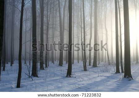 Winter deciduous forest on a foggy December's morning.