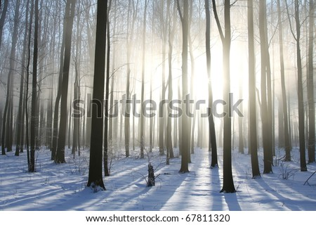 Winter deciduous forest on a foggy morning. Photo taken in December.