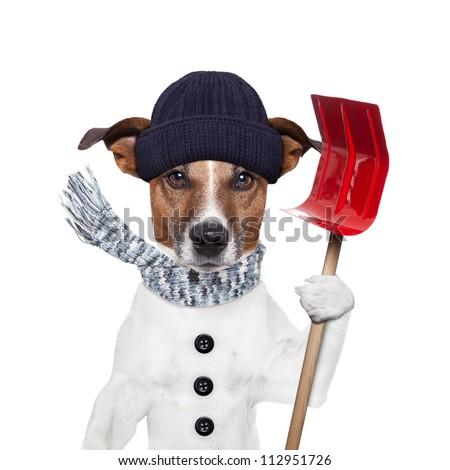 winter dog red shovel snow