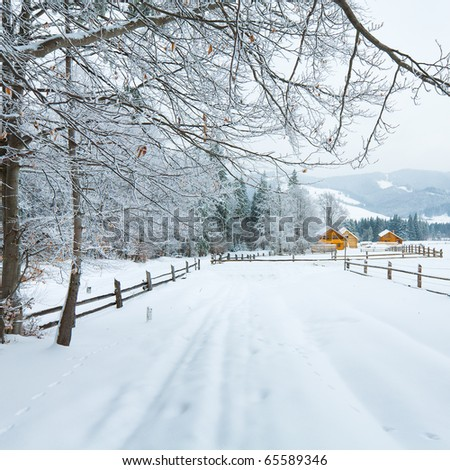 winter dull country mountain landscape with  fence and firs forest