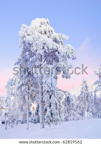 Winter fairy snow forest with pine trees at sunset. Finland