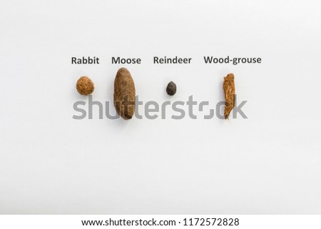 Winter feces from four different animals on white, Rabbit Moose Reindeer and Wood-grouse, picture from Northern Sweden.