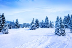Winter fir and pine forest covered with snow after strong snowfall