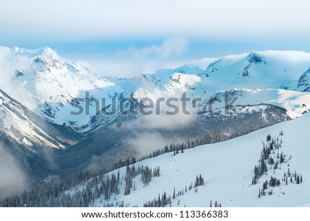 Winter fir trees in mountains covered with fresh snow
