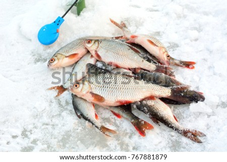 winter fishing from the ice, roach, perch