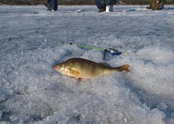 Winter fishing in Siberia of the Yenisei River. Ice fishing is becoming more popular every year and a way to still get out there with nature and the thrill of the catch.