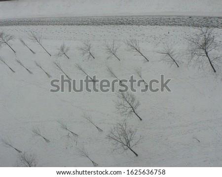 winter flowers outside the window