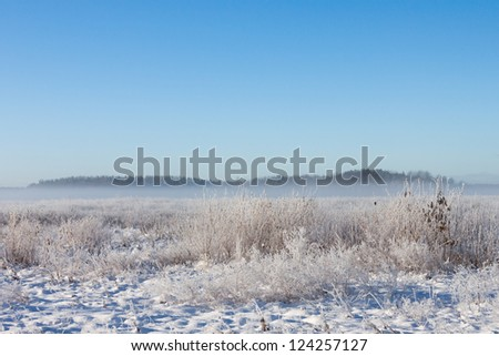 Winter foggy field under snow with forest at the background