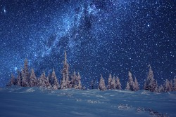 winter forest and milky way