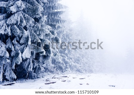 Winter forest covered by snow in mist in Cantoryja hill