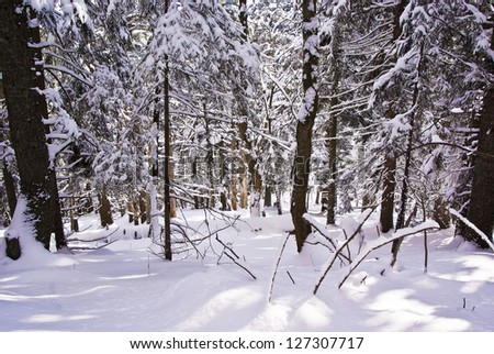 Winter forest covered with fresh snow