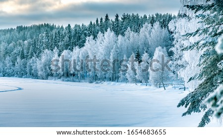 Winter forest edge at frozen river: typical Northern Sweden landscape - birch and spruce tree covered by hoarfrost - very cold day, Lappland, Sweden Stock foto ©
