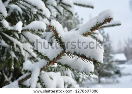 Winter forest, fir tree, fir-tree branches #1278697888