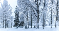Winter forest. Forest in the snow.