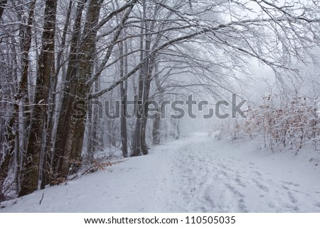 winter forest in a mist
