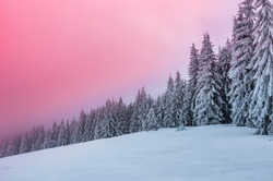 Winter forest in Beskidy mountains, Poland