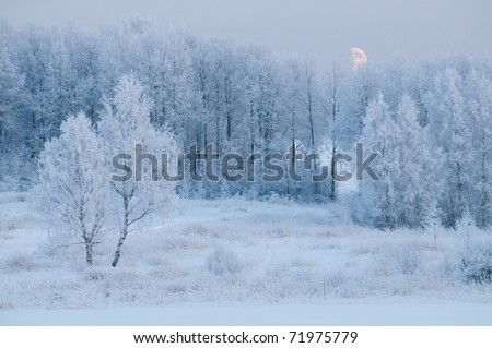Winter forest in hoar at the evening with moon.